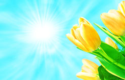 Flowers and sun Royalty Free Stock Image