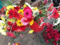 Flowers. Sun flower at jessore in bangladesh stock photos