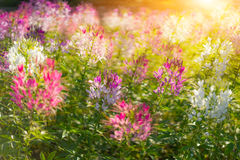 Flowers in the sun light. Stock Image