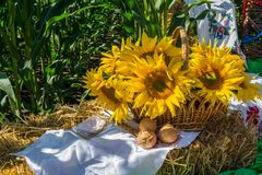 Flowers of a sunflower in a basket, on a straw bale, against a background of a field of corn stock photo