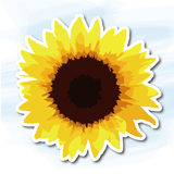 Flowers, sunflower Royalty Free Stock Images