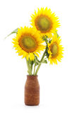 Flowers sunflower in a vase. Stock Images