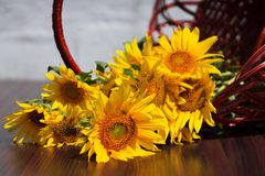 Flowers sunflowers in a basket on a blurred background Royalty Free Stock Images