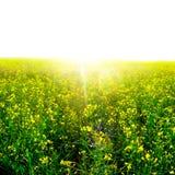 Flowers in sunlight Stock Photos