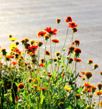 Flowers in sunlight Stock Photography