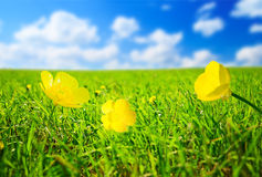 Flowers and sunny day Royalty Free Stock Photo