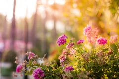 Flowers in sunny garden bed Stock Images
