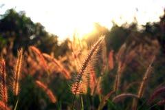 Flowers at sunrise the dark Stock Photo