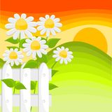 Flowers and sunset Royalty Free Stock Image