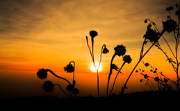 Flowers on the sunset background. royalty free stock photo