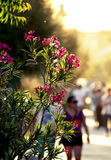 Flowers on sunset Stock Image