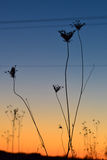 Flowers in the sunset Stock Image