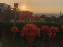 Flowers at sunset. Flowers against grayish sky Royalty Free Stock Photos