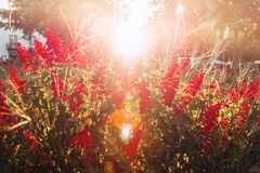 Flowers sunset light royalty free stock photo