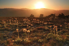 Flowers on the sunset in the valley Royalty Free Stock Photos