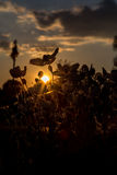 Flowers on the suny dawn backlight with sun.  Royalty Free Stock Photos