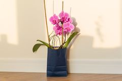 Flowers surprise in the gift bag. Pink orchid indoors on the floor, background light solar wall, copy space. royalty free stock photo