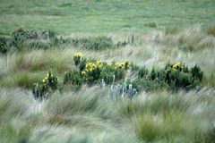 Flowers surrounded by thick grass in the Antisana Ecological Reserve Royalty Free Stock Photos
