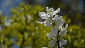 Flowers sway in wind.Bees flying in flowers. stock footage