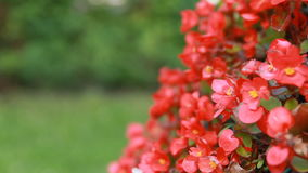 Flowers Swaying in the Wind with Copyspace. Close-up. stock video