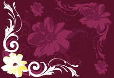 Flowers and swirls. On floral background Royalty Free Stock Photography