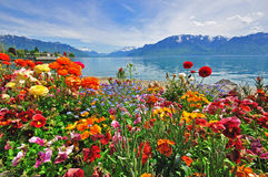 Flowers in swiss Alps. Vevey harbor Royalty Free Stock Images