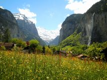 Flowers in Swiss Valley. Stunning view of flowers and mountains in Lauterbrunnen Valley stock images