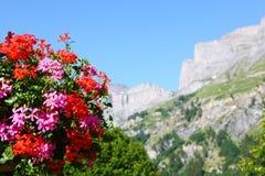 Flowers in swiss village Stock Photo