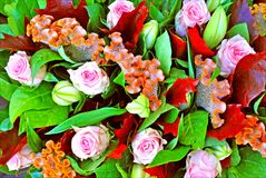 Flowers synthesis beautiful bouquet background and wallpapers in top high quality prints royalty free stock images