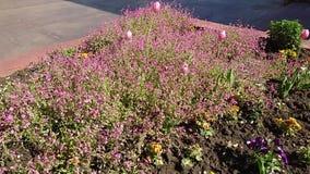 Flowers in Târgu Jiu Prefecture Square,Romania 1
