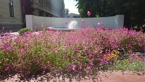 Flowers in Târgu Jiu Prefecture Square,Romania 2