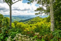 Flowers and Tall Trees Line the Blue Ridge Parkway in North Carolina. Flowers and trees provide the framework for a spectacular view of the Blue Ridge Mountains stock images