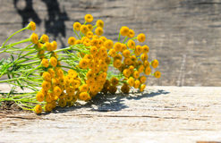 Flowers of tansy on wooden background. Flowers of tansy on the wooden background stock photo