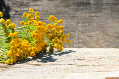 Flowers of tansy on wooden background. Flowers of tansy on the wooden background stock photography