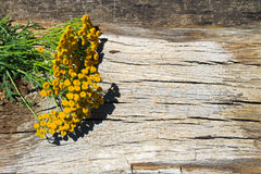 Flowers of tansy on wooden background. Flowers of tansy on the wooden background royalty free stock photos