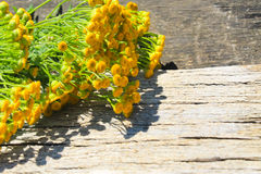Flowers of tansy on wooden background. Flowers of tansy on the wooden background royalty free stock image