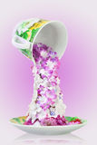 Flowers tea in cup Royalty Free Stock Images