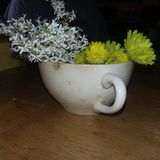 Flowers in a Teacup. Flowers in teacup royalty free stock photography