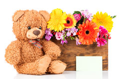 Flowers and teddy bear. On white background Stock Image