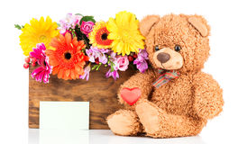 Flowers and a teddy bear. On white background Royalty Free Stock Photo