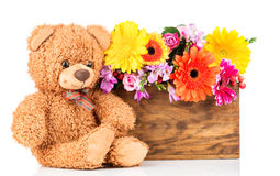 Flowers and teddy bear. On white background Stock Photography