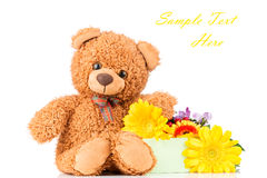 Flowers and a teddy bear. On white background Stock Photos