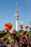 Flowers with television tower, Hamburg Royalty Free Stock Images