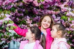 Flowers tender bloom. Kids enjoy cherry blossom. True friendship. Pink our favorite. Children spring garden. Sakura. Garden. Sisters friends sakura trees royalty free stock photos