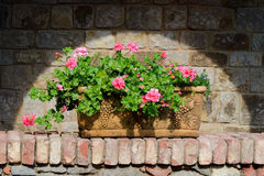 Flowers in  terracotta box. In spotlight Stock Image