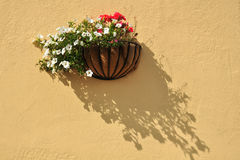 Flowers on textured wall. Flowers in decorative flowerpot on yellow-cream background of a wall with texture Stock Image
