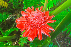 Flowers from Thailand Royalty Free Stock Photos