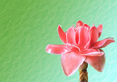 Flowers from Thailand, Etlingera Elatior or Red Torch Ginger Royalty Free Stock Photos