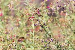 Flowers on thorny plants in nature. In the park in nature Royalty Free Stock Photo
