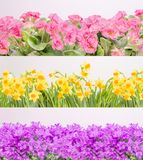 Flowers. In three rows background Stock Image